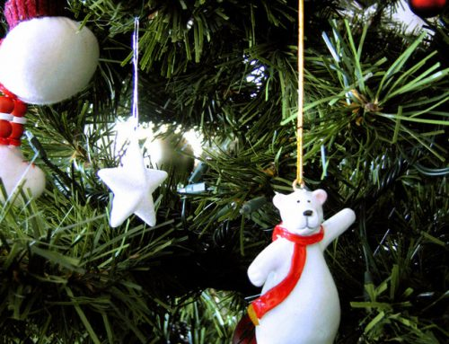 SPD Hagen verschenkt Weihnachtsbäume
