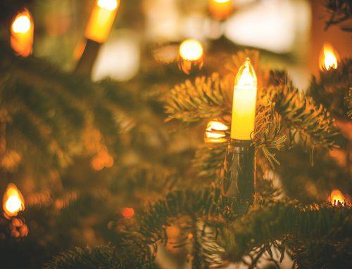 Wir haben Weihnachtsbäume verschenkt